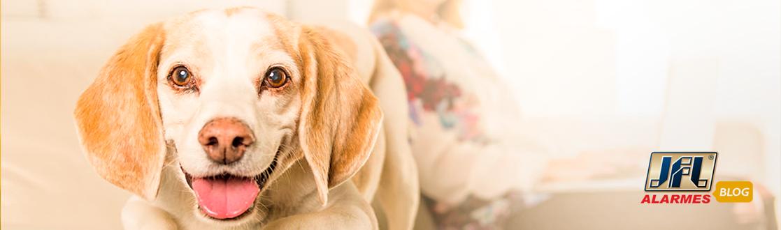 Sensor PET: proteção para casa e para seu animal de estimação